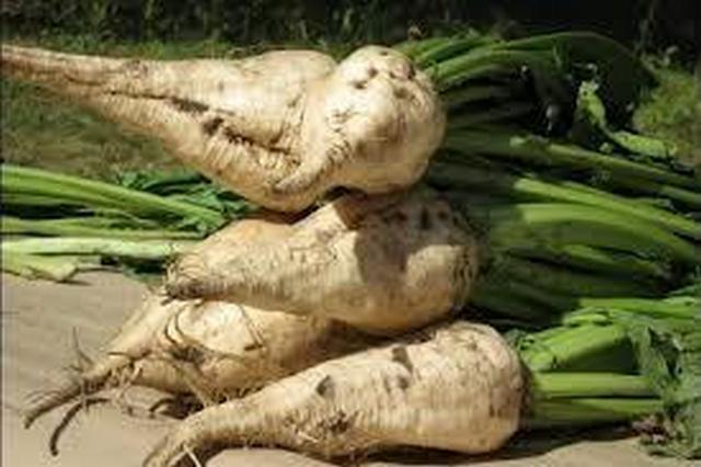 Урожай сахарной свеклы с тамбовских полей превысил 4 миллиона тонн