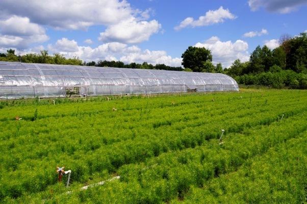 Тамбовская область значительно увеличит реализацию посадочного материала на продажу в другие регионы