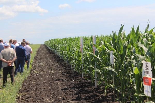 Тамбовские фермеры и агрономы обсудили формирование сортовой политики на текущий год