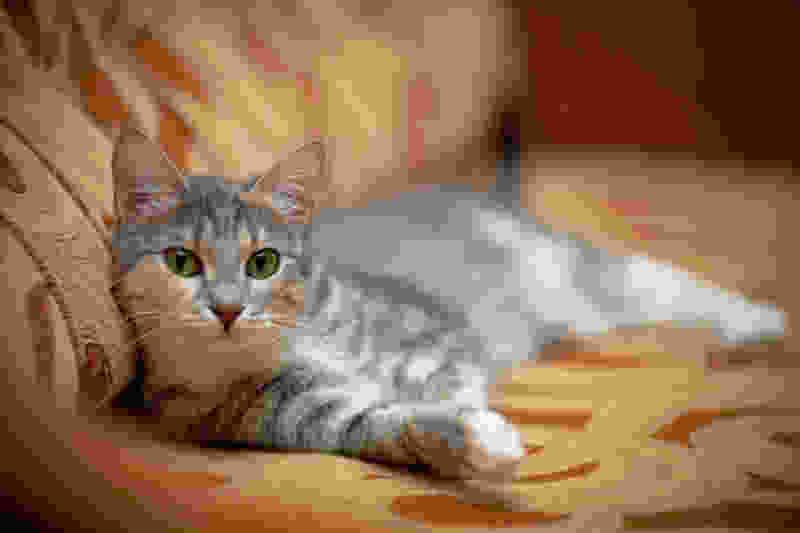 Особенности содержания кошки
