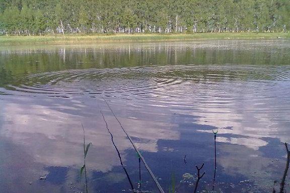 В Мичуринске в пруд попадают нечистоты из канализации