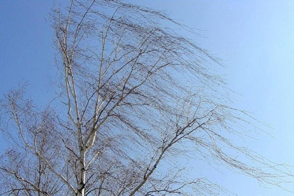 В ближайшие часы в Тамбовской области ожидается усиление ветра