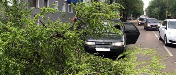 ВТамбове наавтомобиль сдетьми обрушилось дерево