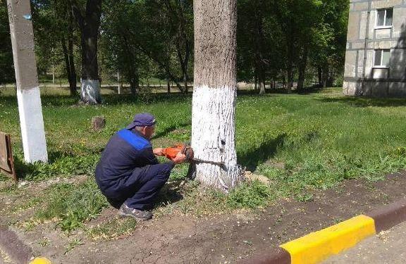 В тамбовских дворах этим летом спилят 159 деревьев