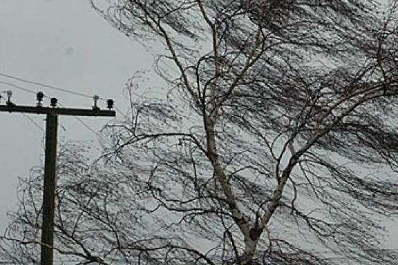 В Тамбовской области 1 мая ожидается сильный ветер