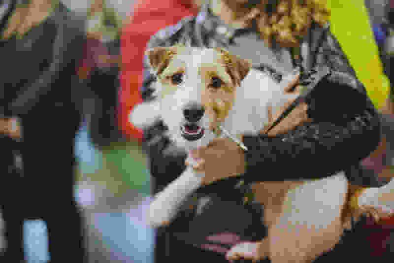 Выставка собак всех пород пройдет на тамбовском ипподроме