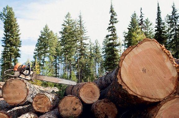 Житель Моршанска незаконно вырубил более 20 тысяч кубометров леса