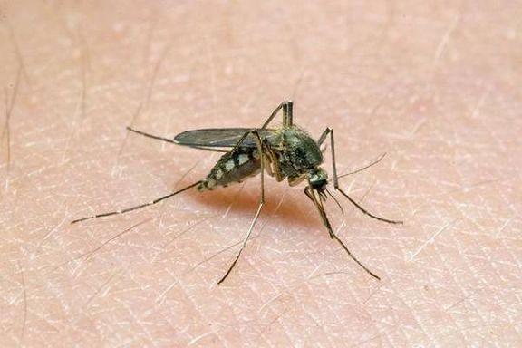 Энтомолог объяснил почему и кого кусают комары
