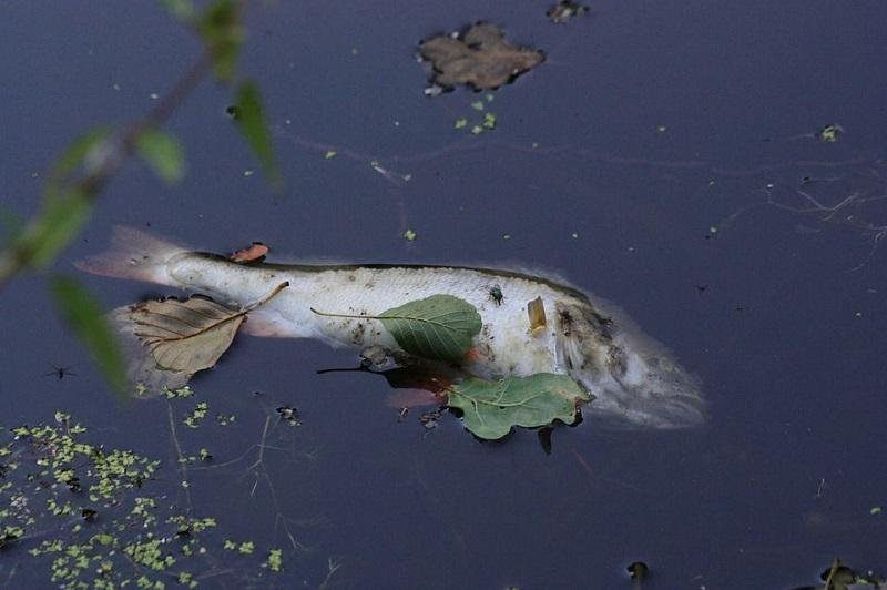 """Специалист Росрыболовства: """"Причиной массовой гибели рыбы в Цне мог стать """"ядовитый"""" омут"""""""
