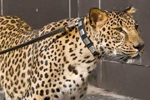 Тамбовчане больше не смогут заводить змей, крокодилов и леопардов