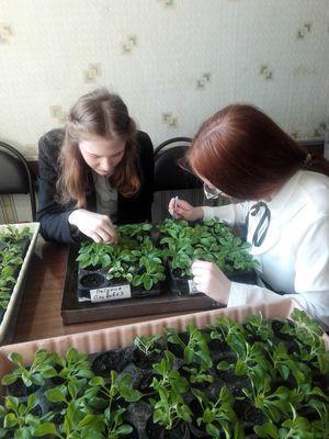 Юные тамбовчане приняли участие во всероссийском субботнике