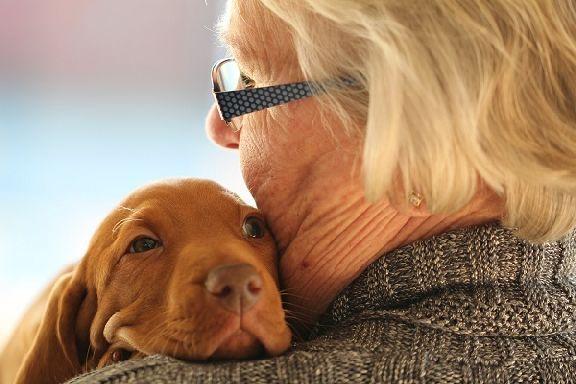 Кинолог назвал лучшие породы собак для пожилых людей