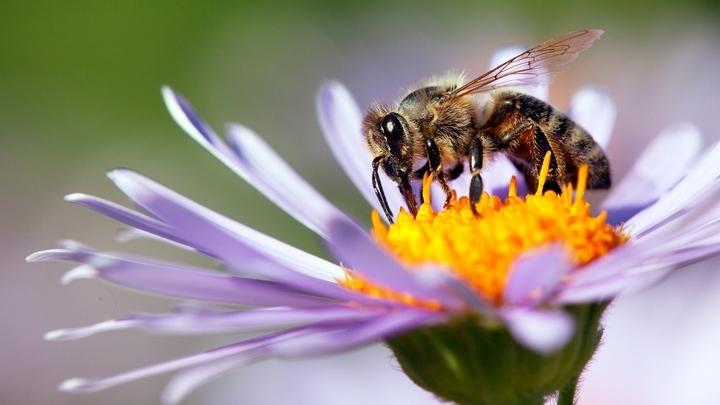 Урожай Тамбовского мёда в опасности из-за массовой гибели пчёл