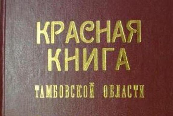 В Тамбовской области обновят Красную книгу растений и грибов