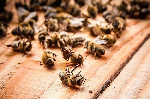 В Тамбовской области взяли на контроль решение проблемы массовой гибели пчёл