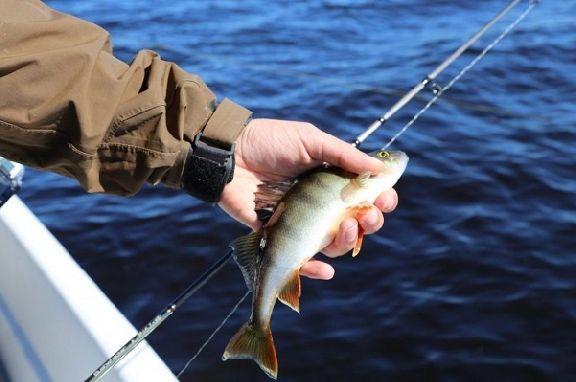 Для тамбовчан введут новые правила рыбалки
