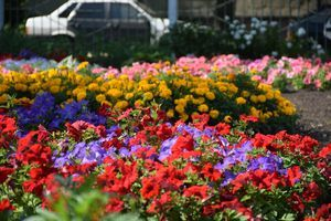 Территорию детского сада «Катюша» педагоги превратили в цветущий сад