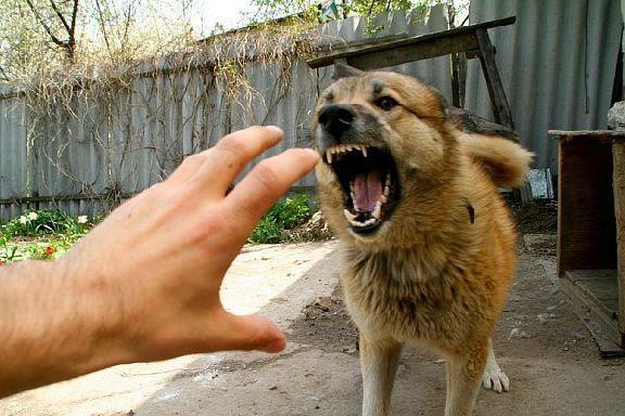В Мичуринске участились случаи нападения бездомных собак