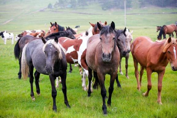 В Жердевке жителей пугает табун лошадей