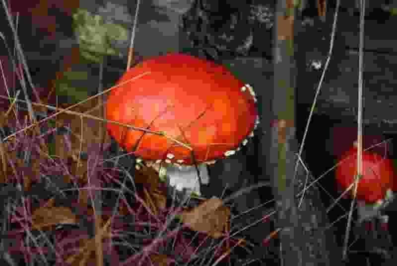 Тамбовскими грибами отправились 54 человека