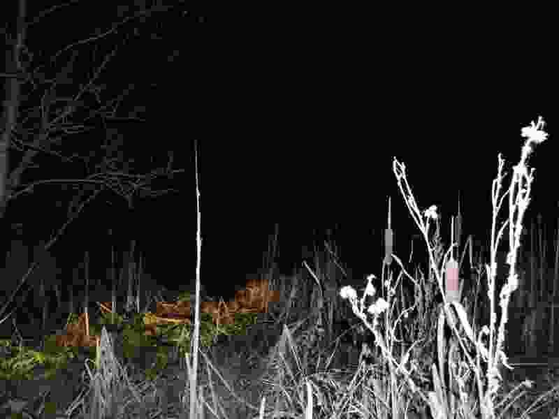 Подросток, пропавший на днях в Тамбовской области, был найден замёрзшим недалеко от собственного дома