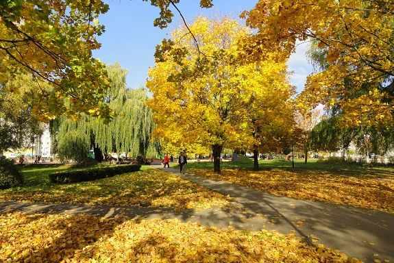 Синоптики о погоде: середина октября порадует тамбовчан теплом