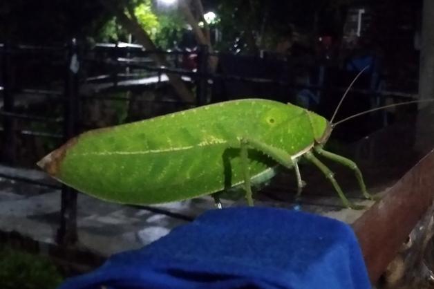 Сотрудники ТГУ обнаружили редкое насекомое