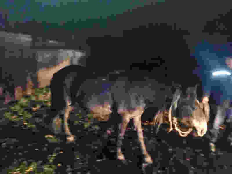 """В Тамбовской области мужчина ехал на лошади по проезжей части и угодил под колёса """"Оки"""""""