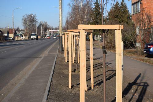 Масштабное озеленение улиц Киквидзе и 40 лет Октября