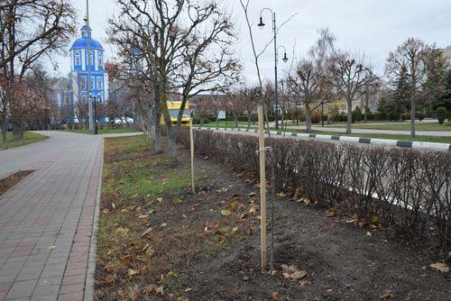 Осенний «ремонт» зеленых насаждений в Тамбове
