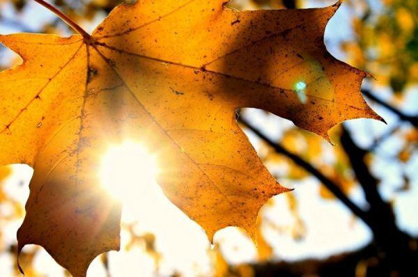 Синоптики о погоде: Тамбов накроет мощная волна тепла