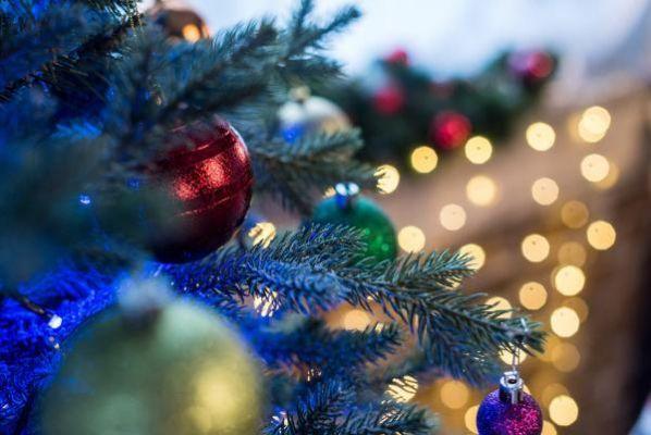 К новому году в Тамбовской области срубят 30 тысяч елок