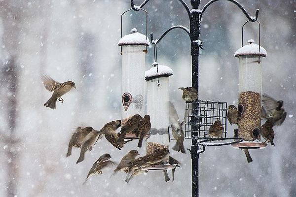 """В заповеднике """"Воронинский"""" проводят конкурс, чтобы помочь птицам перезимовать"""