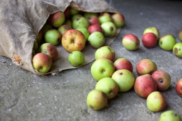 Житель Жердевки получил 3,5 года тюрьмы за кражу яблок