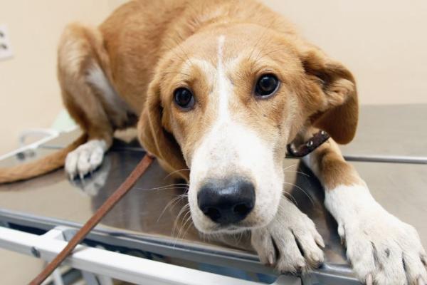 Депутаты Госдумы хотят запретить изымать домашних животных за долги