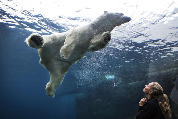 Дмитрий Медведев утвердил правила обращения с животными в цирках и зоопарках