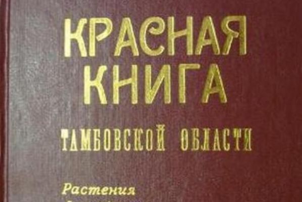 Обзор за неделю: кадровые изменения в администрации области, переиздание Красной книги, рождение двоен