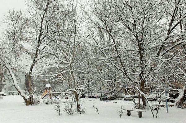 Пасмурная и оттепельная погода продлится в Тамбове до конца недели