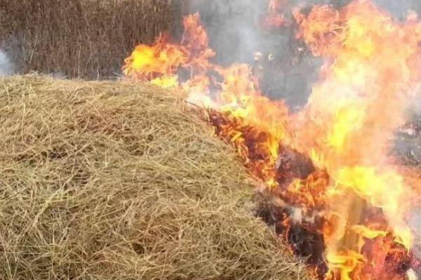 Пьяный житель Жердевки сжег 25 тонн сена для развлечения