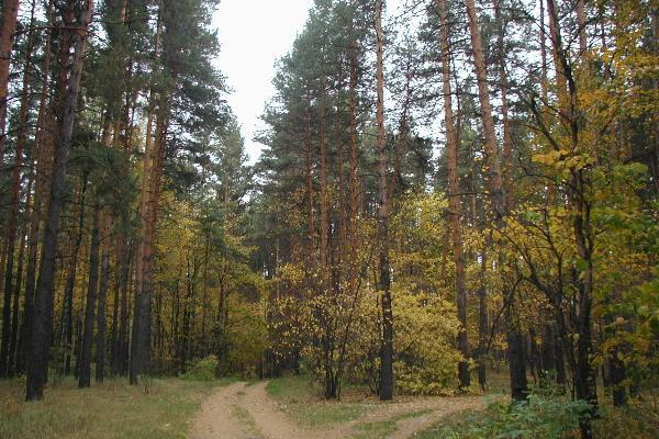 Тамбовские лесоводы определили цели работы на 2020 год