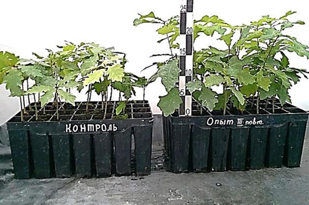 Ученые ТГУ имени Державина повысили приживаемость саженцев для восстановления лесов после пожаров