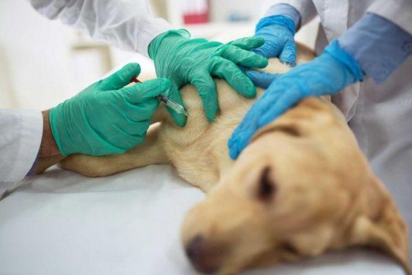 Ветеринарные службы области привлечены к административной ответственности за грубые нарушения
