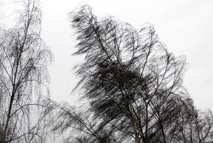 Тамбовчан предупреждают о сильных порывах ветра