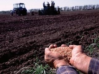 В Тамбовской области засеяно более половины сельскохозяйственных полей