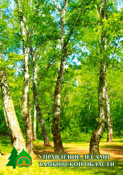 Тамбовские лесоводы выпустили информационную брошюру