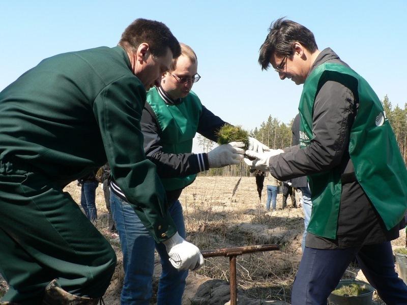 В Тамбовской области стартовали массовые мероприятия по посадке леса