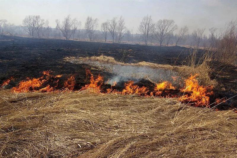 Выжигание сухой травы строго под запретом