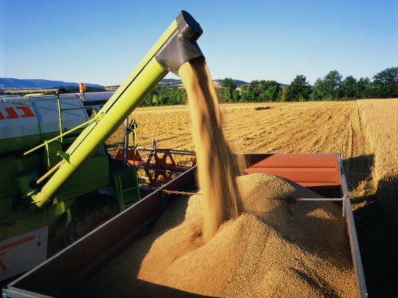В Тамбовской области собран первый миллион тонн зерна