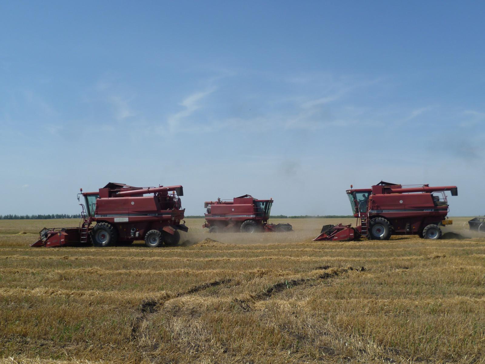 Ожидаемый сбор урожая зерна на Тамбовщине — 4 миллиона тонн