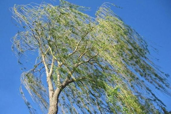 Усиление ветра ждёт тамбовчан на Пасху